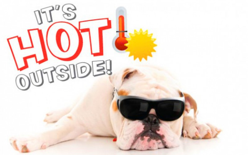 5 Hot Tips for Summer Pet Care